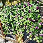 yimeezuyu artificial vines 2pcs artificial morning glory trumpet flower vine fake green plant home garden wall fence outdoor wedding hanging baskets decor