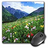 3dRose LLC 8 x 8 x 0.25 Inches Mouse Pad, Colorado Wildflower and Mountains (mp_53249_1)