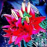 KINGDUO 100 Piezas De Perfume Ahora Semillas Perfume Barato Lirios Semillas, Jardín De Flores De Color Raro Planta-4