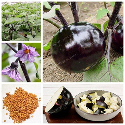Round Noir Violet Aubergine 4 Seasons Semer Seeds Balcon Cour chinois Aubergine Légumes en pot bio graines 50 graines
