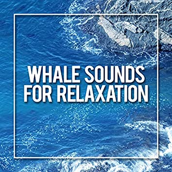 Whale Sounds For Relaxation