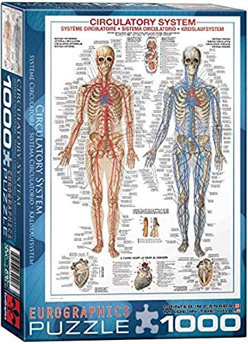 EuroGraphics Circulatory System 1000 Piece Puzzle by EuroGraphics