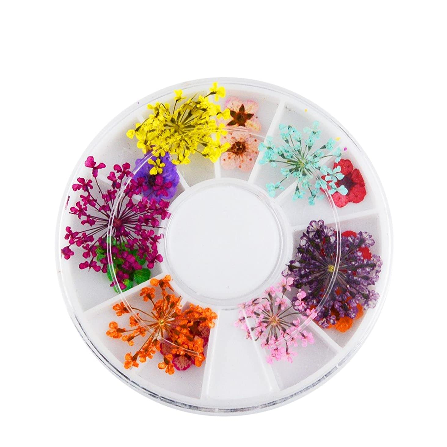 矢印平らな曲1箱乾燥した花のDIYの爪の装飾のマニキュア用