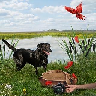 The Money Bird cover art