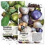 Tomatillo Duo, Purple & Grande Rio Verde Tomatillo Seeds (Physalis ixocarpa) Non-GMO Seeds...
