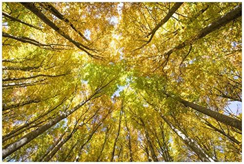 Wallario Poster - Goldener Herbst - Bunte Blätter von unten betrachtet in Premiumqualität, Größe: 61 x 91,5 cm (Maxiposter)