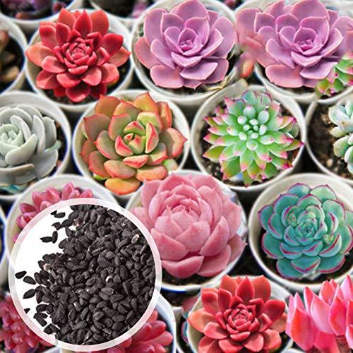 Semillas, Semillas suculentas 600Pcs suculentas forma de flores de semillas Juicy-GMO no Balcón vegetales para jardinería Ideal regalo al aire libre