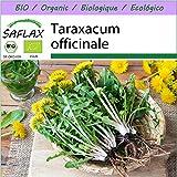 SAFLAX - BIO - Lwenzahn - 400 Samen - Taraxacum officinale