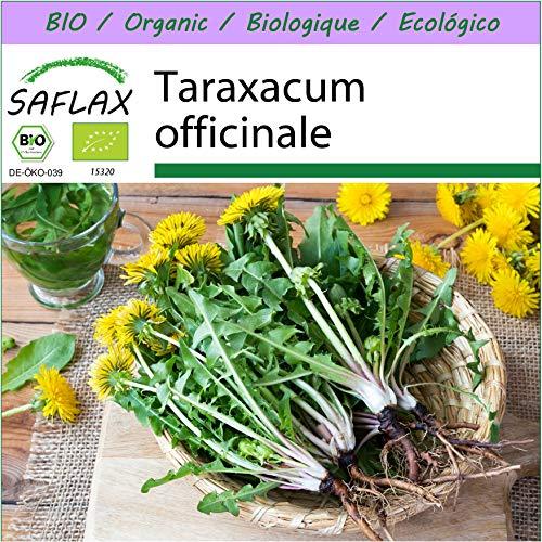 SAFLAX - BIO - Löwenzahn - 400 Samen - Taraxacum officinale
