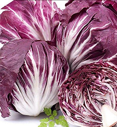 Salat Zichoriensalat Radicchio Palla Rossa Samen