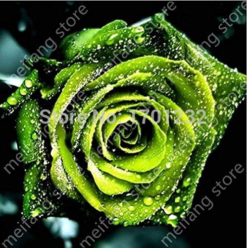 Kostenloser Versand 800pcs8 Arten von seltsamen Samen von Rosen, Garten leuchten, ein großer Diskont Exotische Blumen Gartendekoration