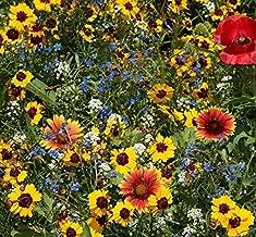 500 Late Blooming Wildflower Mix Flower Seeds #ZFG