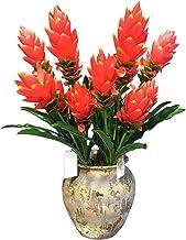 JIAN 70 cm kunstmatige strelizia planten grote vetplanten bladeren tropische palmboom nep gras plastic jungle agave plant ...