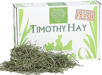 Best hays for bunny