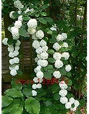 20 semillas de semillas / bolsa de hortensias, hortensias china, flores de hortensia bonsai, 11 colores semillas de flores, de crecimiento natural para jardín de casa