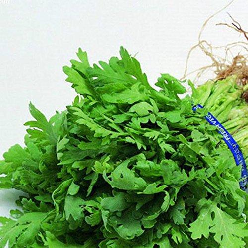 Graines originales Paquet Coriandre Saisons Graine de Persil Graines de légumes bio pour les légumes Balcon Potted Happy Farm - 100 Pcs