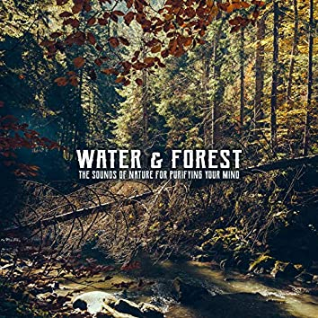 Water & Forest. The Sounds of Nature for Purifying Your Mind