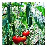 HJHQQ-CZYHG Rankhilfen Plants Plants Rank Rank Rank Guida Network con Big Mesh Generale Network Plants Strutturali Classifica Giardino per Giardino (Color : 1.8 * 5m)