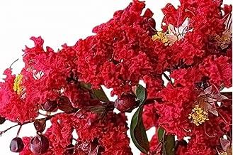 Red Rocket Crape Myrtle Seeds UPC 600188196382 + 2 Free Plant Markers (150)