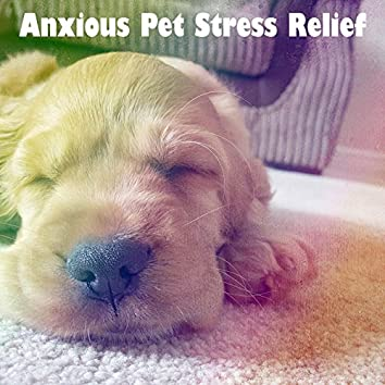Anxious Pet Stress Relief