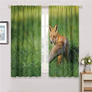 Fox Decor Blackout Curtain Set The Red Fox with Fluffy Tail Looking Behind in Grass Digital Image Kindergarten Shading Insulation W42 x L84 Inch Fern Green and Ginger