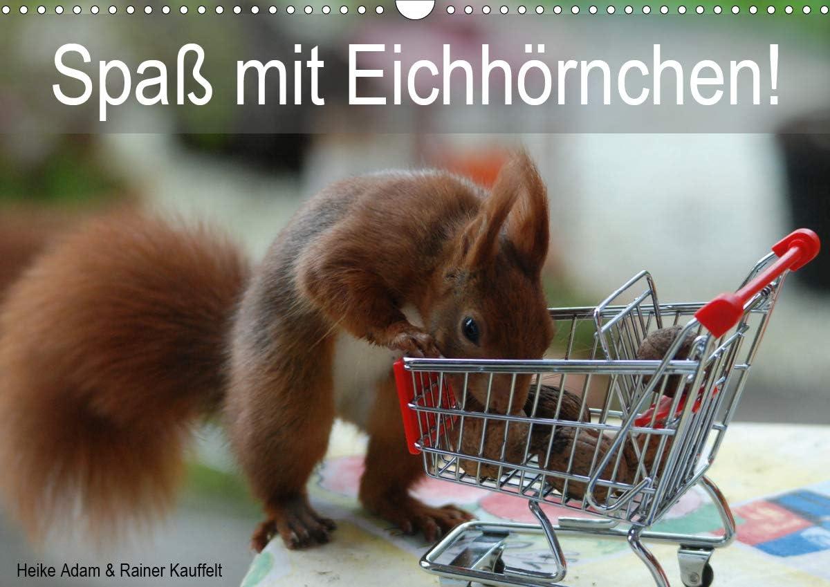 Spaß Mail order cheap mit Eichhörnchen Wandkalender DIN NEW 2021 quer A3