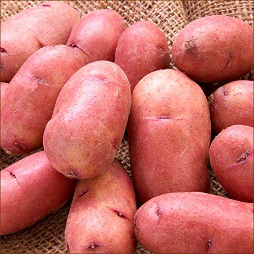 北海道産 新じゃが じゃがいも レッドムーン 5kg (共撰/LM・Lサイズ/約34〜54個入) 野菜 北海道 お取り寄せ