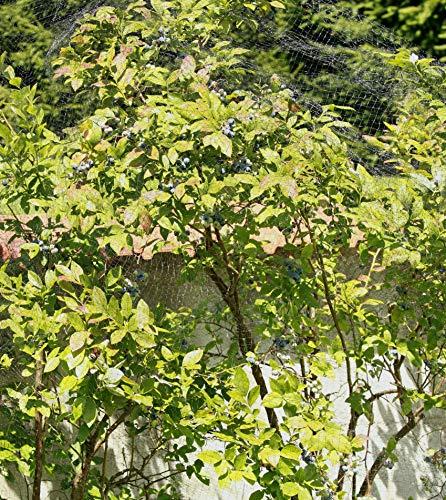 Windhager Vogelschutznetz Ortonet, 10 x 4m; schwarz; Schützt Obstbäume vor Vogelfraß - 3
