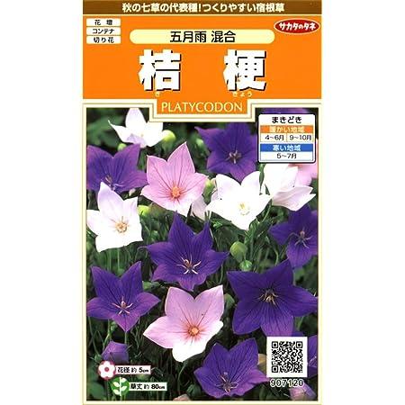 サカタのタネ 実咲花7120 桔梗 五月雨混合 00907120
