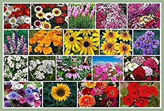 Best wild daffodil seeds Reviews