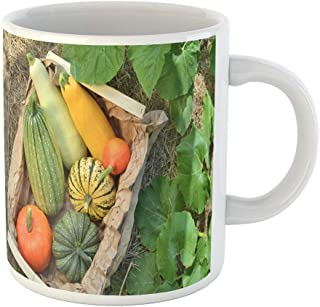 Tarolo 11 Oz Mug Coffee Mug Ceramic Tea Cup Colorful Winter Box Fresh Pumpkins and Squash Vegetables Harvest on Straw in the Garden Green Growing Large C-handle Family and Office Gift