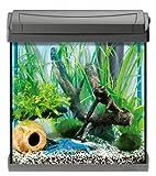 nano aquarium der neue aquaristiktrend. Black Bedroom Furniture Sets. Home Design Ideas