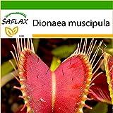 SAFLAX - Venus atrapamoscas - 10 semillas - Con sustrato estéril para cultivo - Dionaea...
