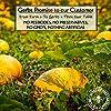 GERBS Unsalted Pumpkin Seed Kernels, 32 ounce Bag, Roasted, Top 14 Food Allergen Free, Non GMO, Vegan, Keto, Paleo Friendly #1