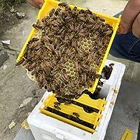 養蜂家のため 受粉箱ボックスセット+ ハニーバケツホルダー 飼育ツール 便利グズ 品質保証