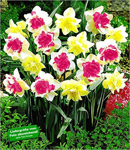 BALDUR-Garten Narzissen 'Double Duo Mix',15 Zwiebeln, Narcissus, Osterglocken,