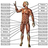 LAMINATED 24x24 Poster: Anatomy Of Human Body Parts Body Parts Names Human Anatomy Human Anatomy Diagram - Human Anatomy