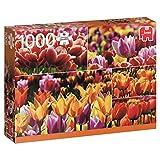 Jumbo- Tulips pcs Tulipanes holandeses, Puzzle de 1000 Piezas (618364)