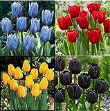 Mehrjährige krautige Blüten,Tulpenzwiebeln,Seltene Pflanzen,Perfekte Schnittblumen,Gartenblumen,Exotische,Edle und elegante Tulpen-12 Zwiebeln,1