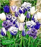 BALDUR Garten Tulpen-Mix 'Blue Blend', 10 Zwiebeln