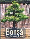 Bonsái  Cuaderno de trabajo: Ayuda de planificación para el diseño de bonsáis