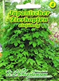 Japanischer Zierhopfen Hopfen Humulus scandens japonicus rankend