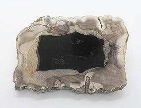 EAGems Petrified Wood Slab, a Polished Fossil Stone Tree Specimen Slice from Indonesia, Medium Size 6 x 4 inch, Tan/Black ...