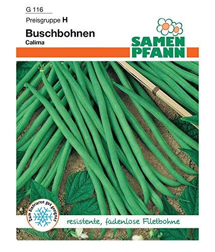 Samen Pfann G116 Buschbohne Calima (Buschbohnensamen)