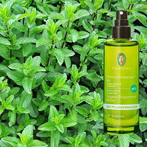 Primavera Vegane Bio Pflanzenwässer Pflegewässer 100% naturreine ätherische Öle 100ml, Duft:Pfefferminzwasser