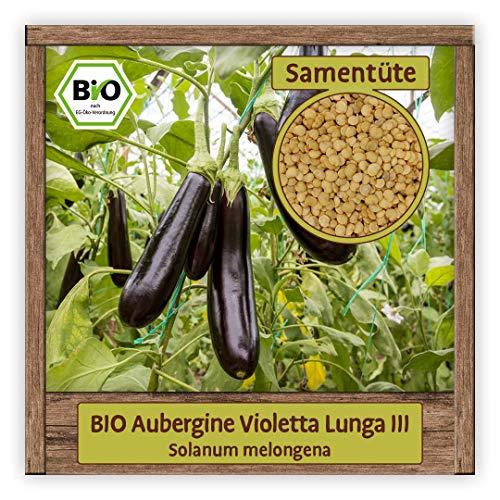 BIO Aubergine Samen Sorte Violetta Lunga III (Solanum melongena) Gemüsesamen Eierfrucht Saatgut