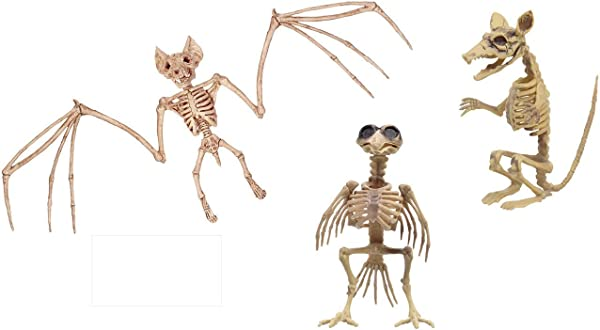 Halloween Skeleton Plastic Skeleton Rat Skeleton Crazy And Creepy Halloween Skeletons That Don T Always Have To Be Human Bones Skeleton Raven Blood Thirsty Bat Halloween Decorations