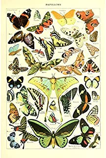 Vintage Poster Print Art Butterflies of The World Breeds Collection Old Scientific Chart Butterfly Home Wall Decor (15.75'' x 23.62'')
