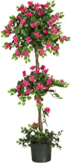bougainvillea flowers for sale