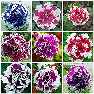 70 Pcspetunia Seeds,Double Petals Petunia Garden,Flower Seeds As Flowerindoor Petunia Petals Flower : Red